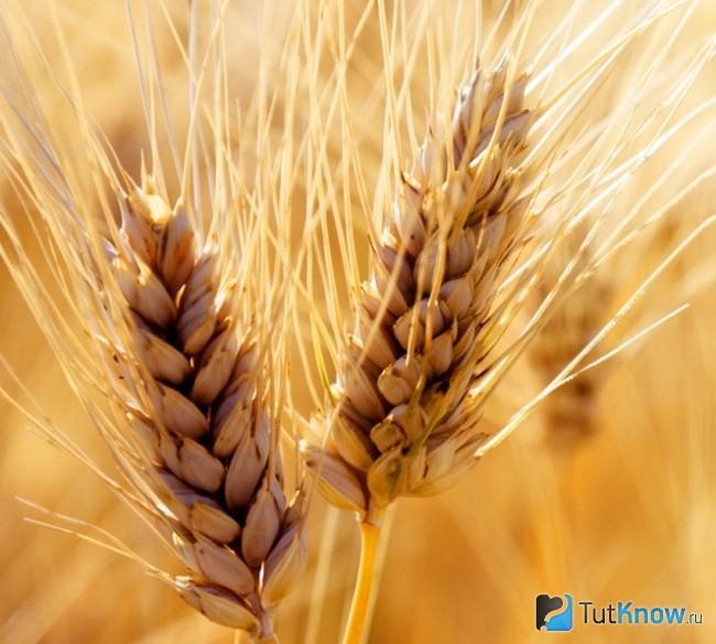 Kaalulangus nisu loikamine Poletage rasva ajakava