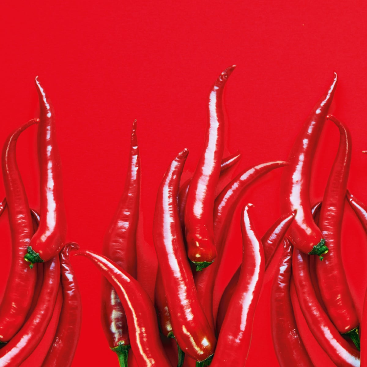 Chili Fat Burner Cena
