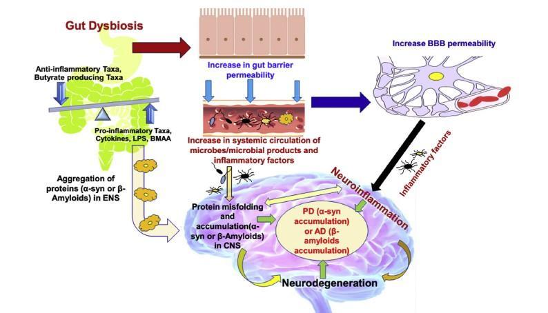 Gut mikroobide kaalulangus
