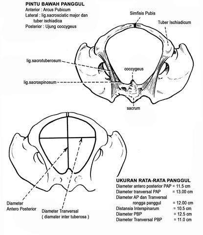 Levoturoksiini annus ja kaalulangus de Novu kaalulangus