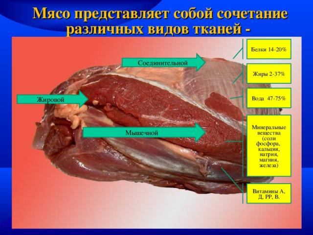 10 Kaalulangus muudid 12 nadala poleb rasva ehitada lihaseid