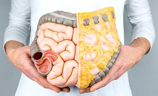 Rasva kadu metabolismiprotsess Komplex ONETWoslim